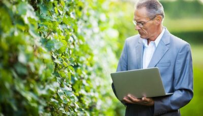 Man evaluating winery vines with computer